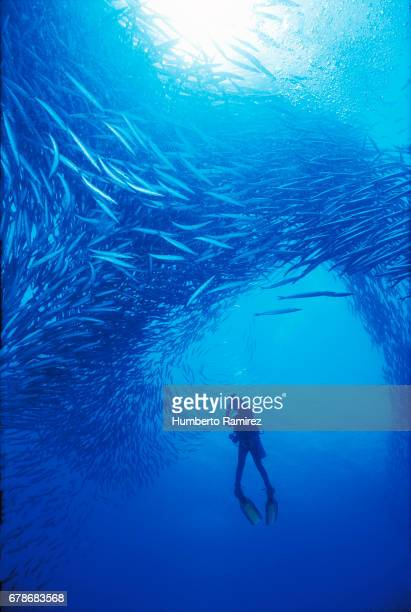 DIVER AND SCHOOL OF FISH.