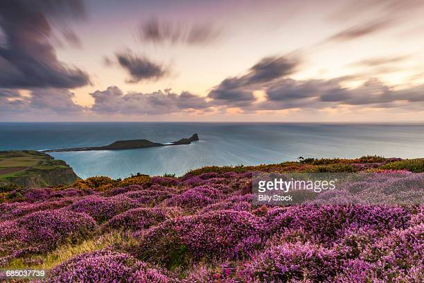 rhossili bay, gower, wales, u.k. - gower peninsula stock photos and pictures