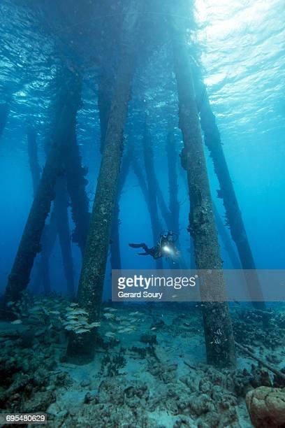 """underwater landscape below the """"salt pier"""" - カリブ海オランダ領 ストックフォトと画像"""
