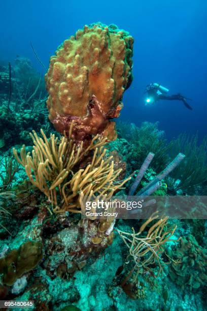 underwater landscape in bonaire - オランダ領リーワード諸島 ストックフォトと画像