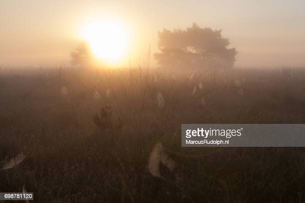 spinnenwebben in de mist - zonsopgang stock pictures, royalty-free photos & images