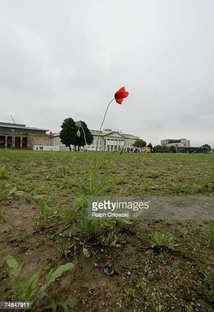 A single lonely poppy blooms on the artwork of Yugoslavian artist Sanja Ivekovic at the Friedrichsplatz during the Documenta 12 on June 21 2007 in...