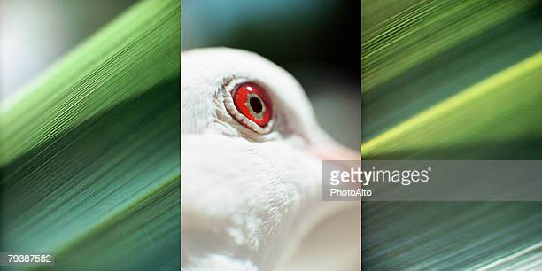 paa102000008 - turtle doves stock photos and pictures