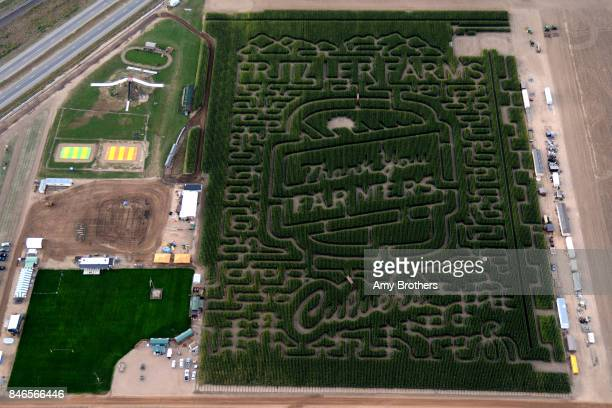 LaSalle CO A 12acre corn maze on the Fritsler farm on September 13 2017 This year the design by Culver is a giant 'Thank you' to famers At night the...