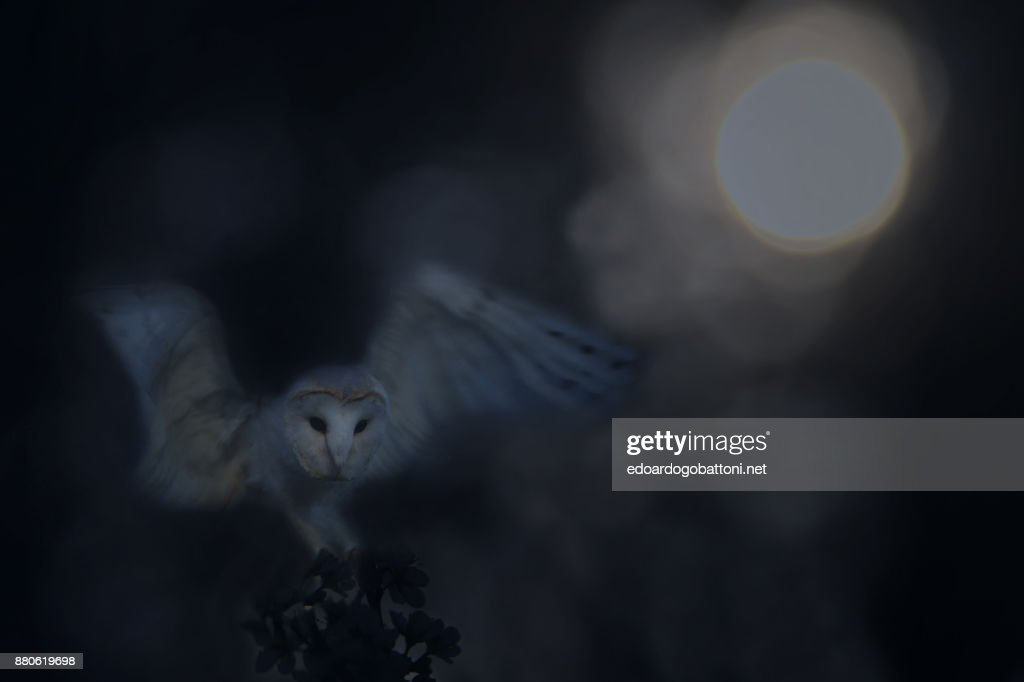 GHOST OF THE NIGHT : Foto stock
