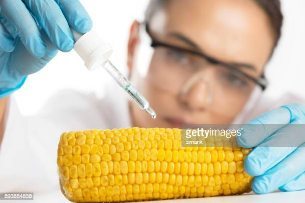 gmo - genetic modification stock pictures, royalty-free photos & images