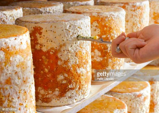 cheese maker testing stilton - cheese stock pictures, royalty-free photos & images