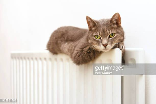 sleepy cat on cosy radiator - cat family stock pictures, royalty-free photos & images