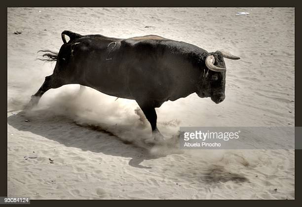 charging bull - bullock stock photos and pictures