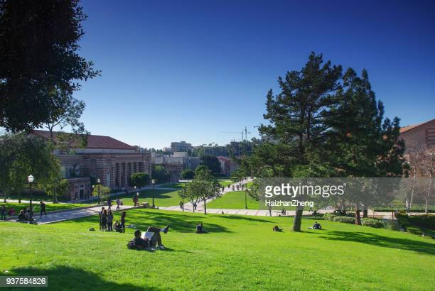 ucla - campus stock pictures, royalty-free photos & images