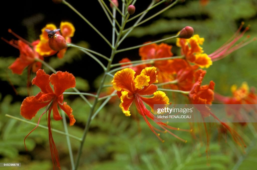 Fleur Et Arbre Afrique Fleur Et Arbre Afrique Pictures Getty Images