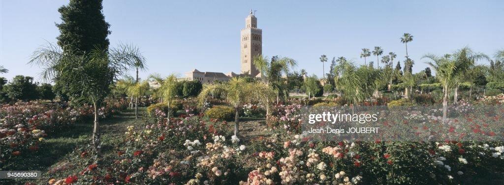 Roseraie Jardin De La Koutoubia Marrakech Maroc Pictures Getty