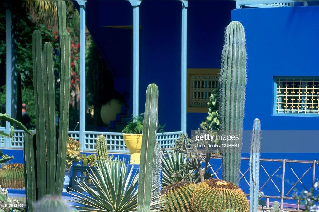 Jardin Majorelle Marrakech Maroc Pictures Getty Images