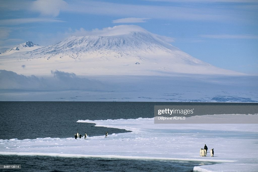 VIEW ON MOUNT EREBUS FROM PACK ICE : News Photo