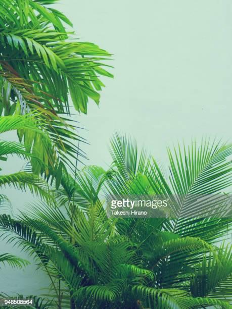 マレーシア、ペナン島 青々とした南国の植物