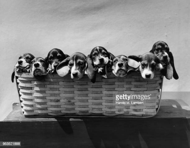 DOGS SITTING IN BASKET