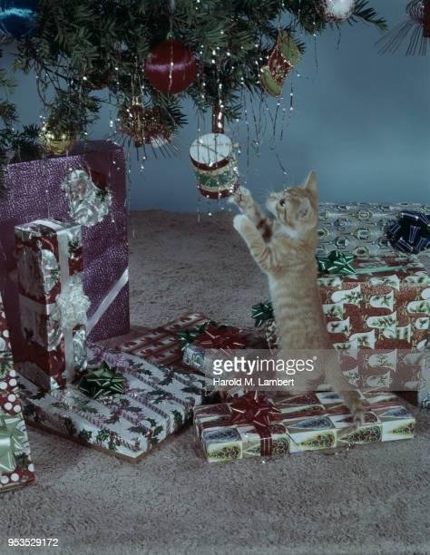 cat playing with christmas tree - mamífero con garras fotografías e imágenes de stock