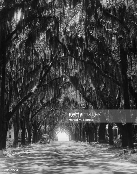 MISSISSIPPI, BILOXI, BENACHI AVE, VIEW OF TREE LINED ROAD