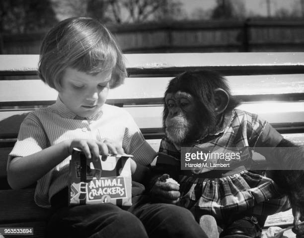 GIRL FEEDING ANIMAL CRACKERS TO MONKEY