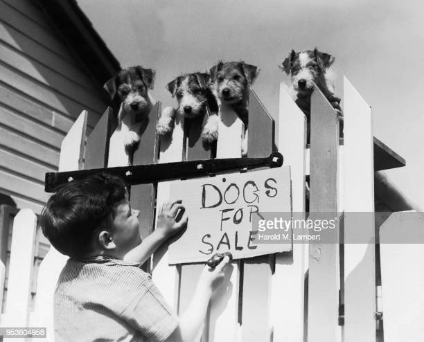 BOY HANGING DOGS FOR SALE SIGN UP