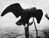 eagle perching tree trunk with wings