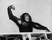 monkey cheering against sky