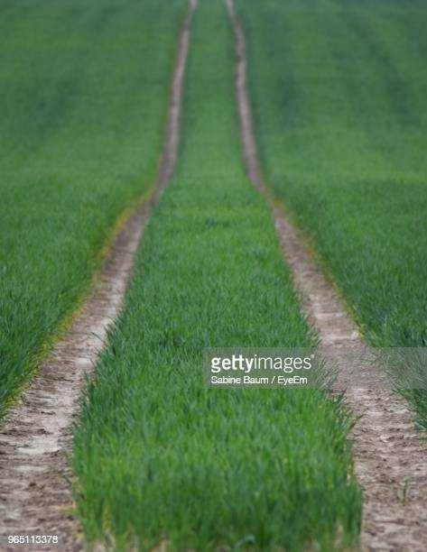 dirt road amidst green field - baum stock pictures, royalty-free photos & images