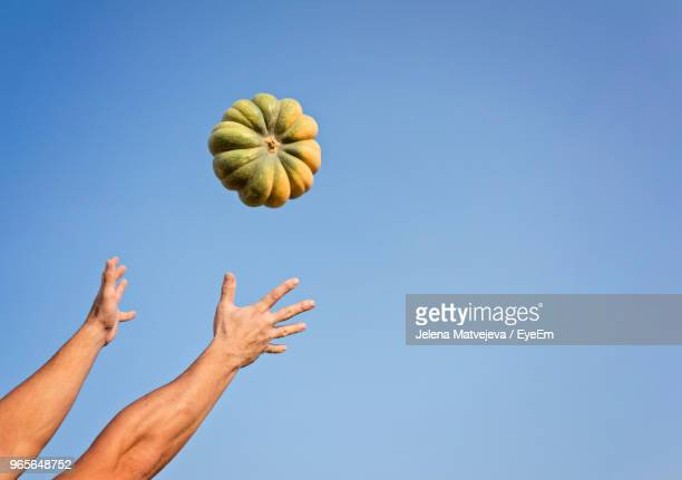 low angle view of man catching pumpkin against clear blue sky - attraper photos et images de collection