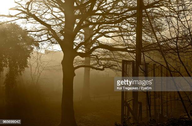 Silhouette Of Bare Trees In Foggy Weather