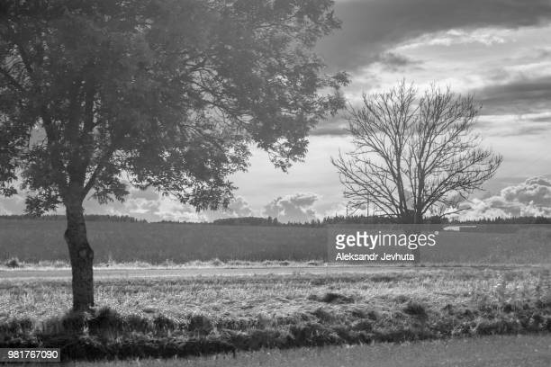 going home - jevhuta stock pictures, royalty-free photos & images