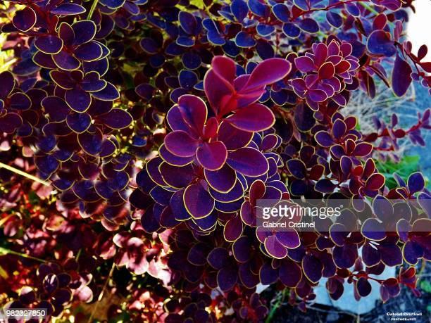 pastel colour. - micrografia científica - fotografias e filmes do acervo