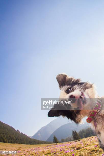 what?! - funny dogs stock pictures, royalty-free photos & images