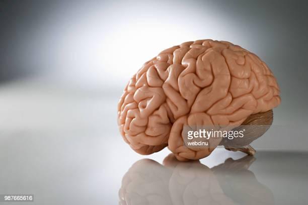 ie245-049 - cerveau humain photos et images de collection