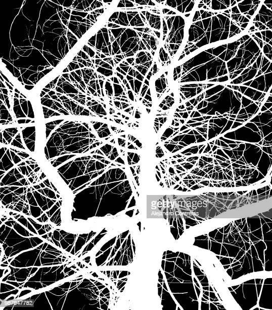 textura en blanco y negro - blanco y negro ストックフォトと画像