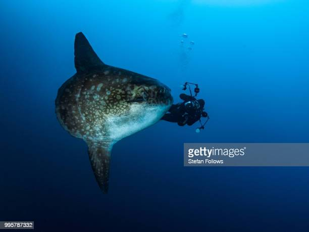 bfg - sunfish stock photos and pictures