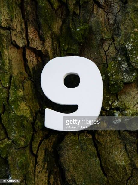 9 - toilet paper tree stock pictures, royalty-free photos & images