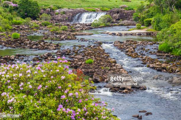 republic of ireland-county mayo-aasleagh falls - brook mitchell bildbanksfoton och bilder