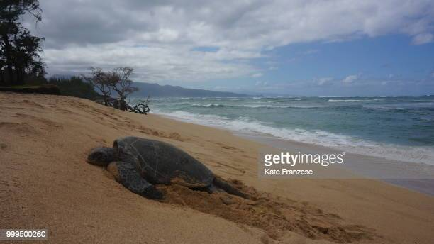 dsc - leatherback turtle stock pictures, royalty-free photos & images