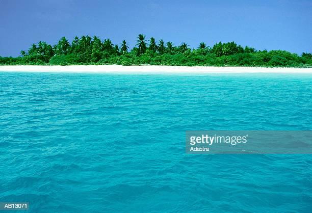 view looking inland to tropical beach with trees / maldives - land in sicht stock-fotos und bilder