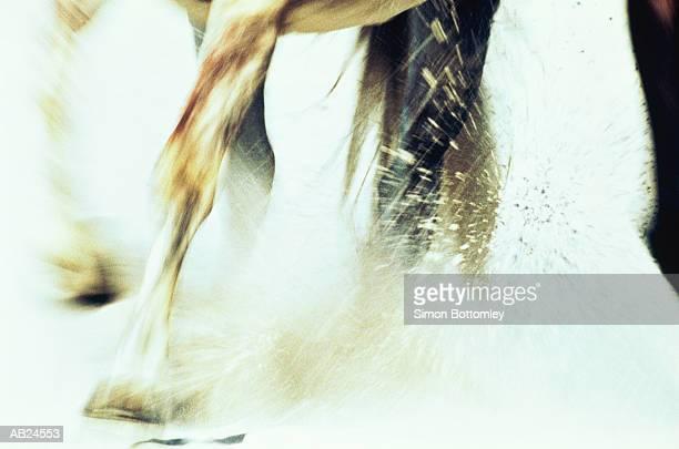 CLOSE-UP / LEGS OF HORSE GALLOPING THROUGH SEA