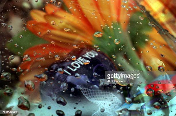 ME0220crash ––ANAHEIM HILLS––Rain drops fall on plastic holding sympathy flowers for James Shumar of Tustin who died after being ejected from a Chevy...