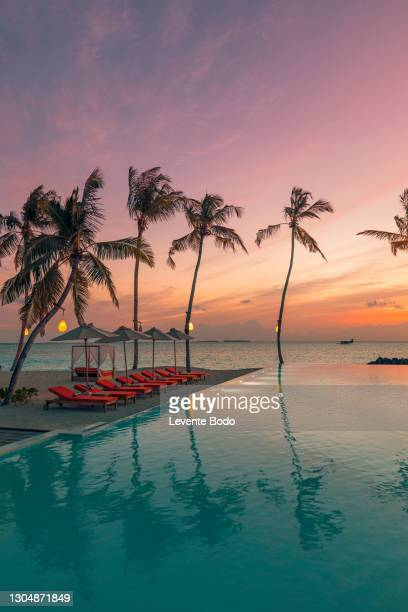 03.august.2019 - maldives, dhaalu atoll, iru veli island: luxurious beach resort with sunset swimming pool reflection and beach chairs or loungers under umbrellas with palm trees and colorful twilight sky. summer island travel and vacation scenic - tropical tree stockfoto's en -beelden