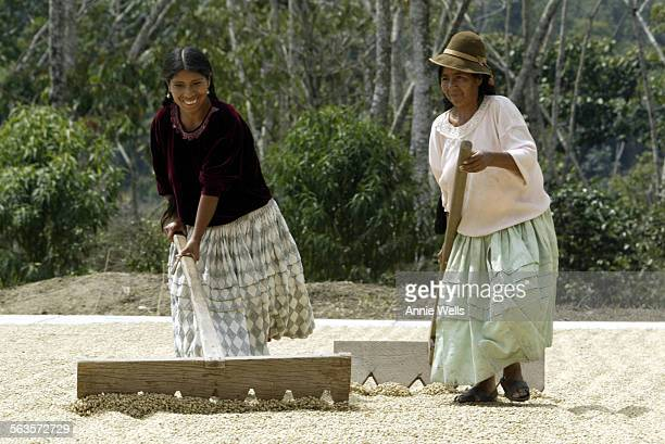 FI1021bolivia In the Yungas Valley Bolivia Celia Condori left and Francisca Quispe rake coffee beans so they will dry evenly at a new coffee plant...
