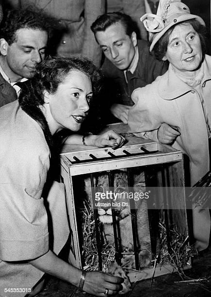 Ursprünglich Marina RsjevskajaSchauspielerin Dübergibt das Löwenbaby 'Emira-Kyriazi', ein Geschenk der Hamburger Zigarettenfabrik Kyriazi, Frau Dr....