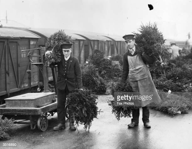Thousands of Christmas trees grown in the Forest of Dean being loaded onto special trains at Grange Court Station Gloucestershire for dispatch all...