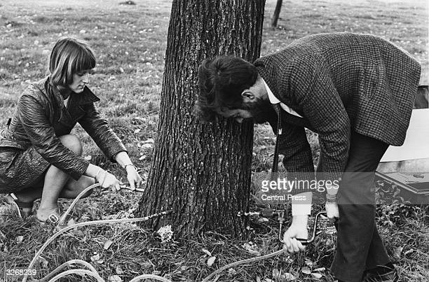 Forestry workers inject chemicals into a tree in order to combat Dutch Elm Disease
