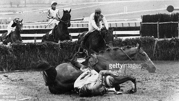 'Hard Hit' falling at the fence with his jockey T Redmond during the Clive Graham 4yearold handicap hurdle at Cheltenham race course while other...