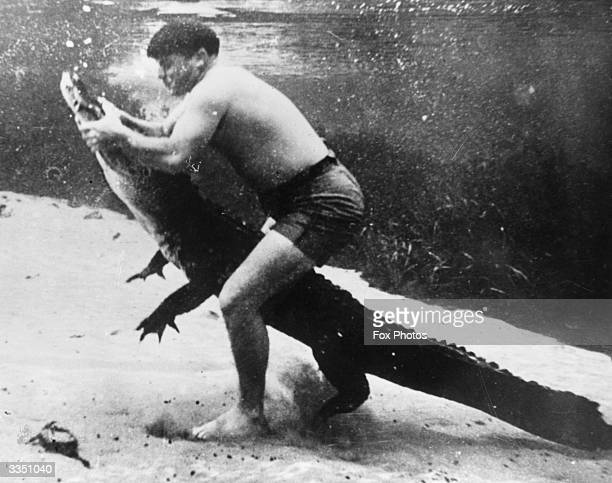 Ross Allen is famous throughout Florida for his alligator taming skills and bravery Allen wrestles with an alligator underwater keeping a tight hold...