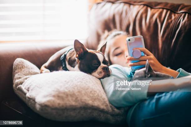 11-year-old girl using her mobile phone while lying on sofa with her dogs - hundeartige stock-fotos und bilder