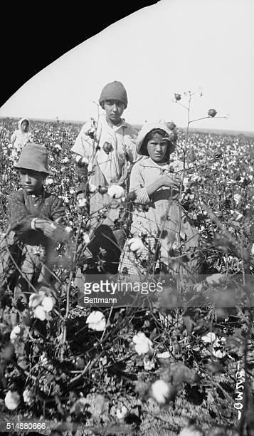 Photo shows Mexican field laborers at work on a Texas cotton plantation These Mexicans were imported for the special work The scarcity of labor in...